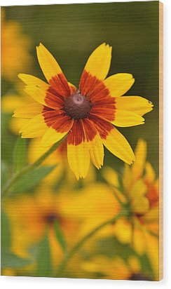 Wood Print featuring the photograph Blush-eyed Susan by JD Grimes