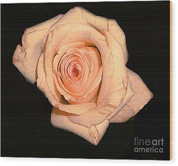 Blush Rose 2 Wood Print by Merton Allen