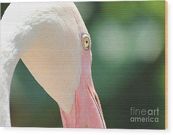 Blushing Flamingo Wood Print by Nola Lee Kelsey