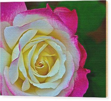 Blushing Rose Wood Print by Bill Owen