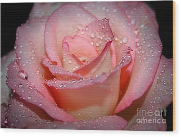 Blushing Rose Wood Print by Tracy  Hall