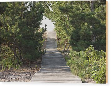 Boardwalk Footpath To The Beach. Wood Print by Schedivy Pictures Inc.