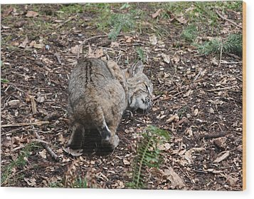 Wood Print featuring the photograph Bobcat - 0014 by S and S Photo
