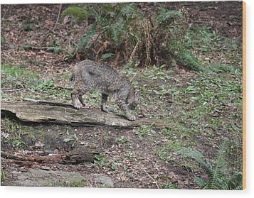 Wood Print featuring the photograph Bobcat - 0018 by S and S Photo
