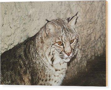 Bobcat Iv Wood Print by DiDi Higginbotham