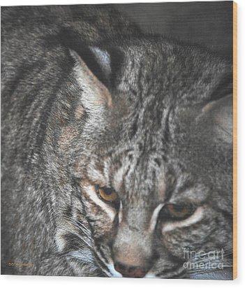 Bobcat Love Wood Print by DiDi Higginbotham