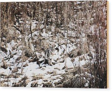 Wood Print featuring the photograph Bobcat Winter by Britt Runyon