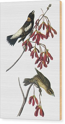Bobolink Wood Print by John James Audubon