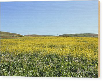 Bodega Bay . Yellow Field . 7d12403 Wood Print by Wingsdomain Art and Photography