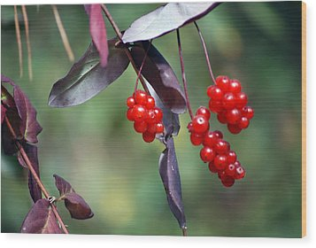 Bokeh Of Coffee Berry Wood Print by Harvey Barrison
