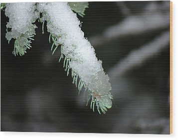 Bokeh Of Evergreen In Snow Wood Print by Harvey Barrison