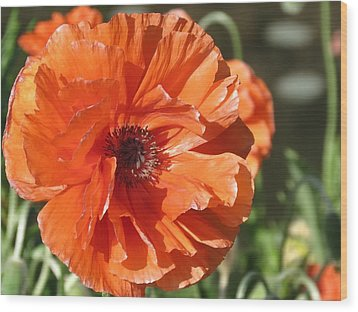 Bold Orange Poppy Wood Print