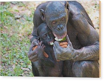 Bonobo 3 Wood Print by Kenneth Albin
