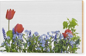 Wood Print featuring the photograph Border From Myosotis And Tulips by Aleksandr Volkov