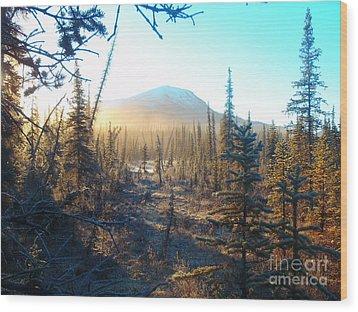 Boreal Forest Sunrise Wood Print by Adam Owen