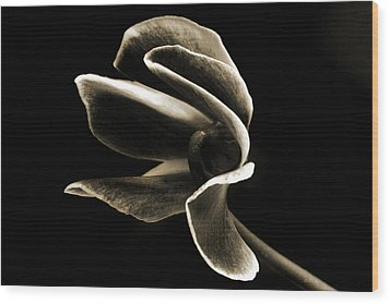 Botanical Abstract. Wood Print by Terence Davis
