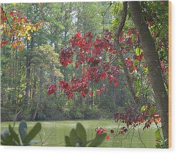 Botanical Garden Waterway Wood Print