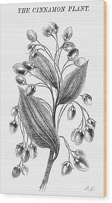 Botany: Cinnamon Plant Wood Print by Granger