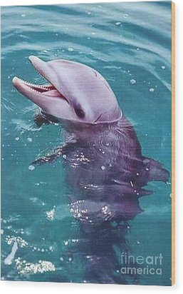 Bottle Nosed Dolphin Wood Print by Diane Kurtz
