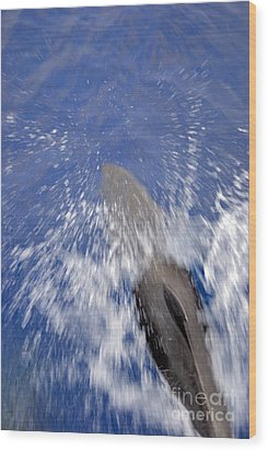 Bottle-nosed Dolphins  Wood Print by Sami Sarkis