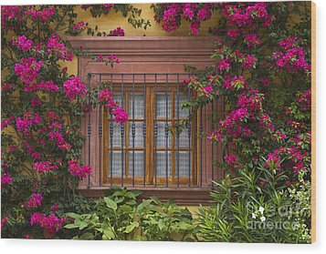 Wood Print featuring the photograph Bougainvillea Window by Craig Lovell