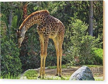 Bowing Giraffe Wood Print by Mariola Bitner