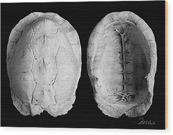 Box Turtle Shell Wood Print by Frederic A Reinecke
