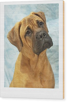 Boxer 169 Wood Print by Larry Matthews