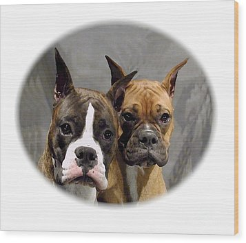 Boxer 402 Wood Print by Larry Matthews