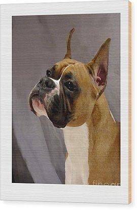 Boxer 413 Wood Print by Larry Matthews