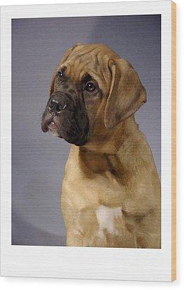Boxer 51 Wood Print by Larry Matthews