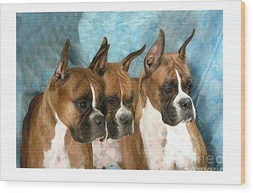 Boxer 655 Wood Print by Larry Matthews