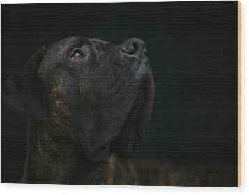 Boxer Dog Looking Up Wood Print by STasker