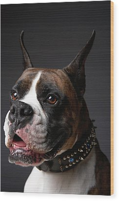 Boxer Dog With Ears Pricked, Close-up Wood Print by Chris Amaral