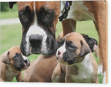 Boxer Mommy Watch Over Pups  Wood Print by Renae Laughner