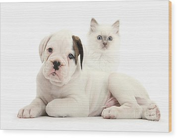 Boxer Puppy And Blue-point Kitten Wood Print by Mark Taylor