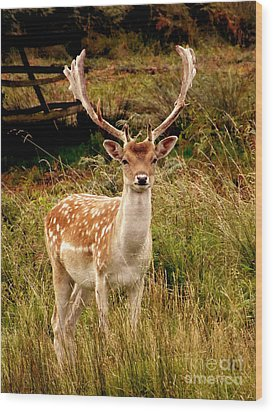 Wood Print featuring the photograph Wildlife Fallow Deer Stag by Linsey Williams