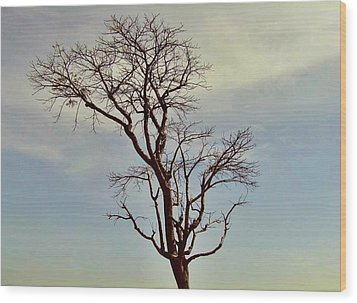 Branch Out Wood Print by Peter P G
