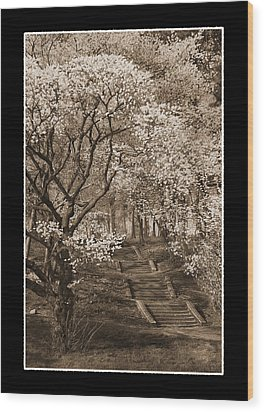 Branchbrook Park In Sepia Wood Print