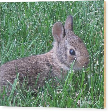 Brave Yard Bunny Wood Print by Donna Cavender