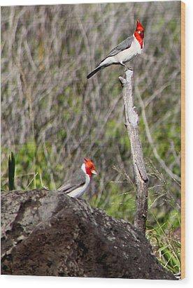 Brazillian Cardinals Wood Print
