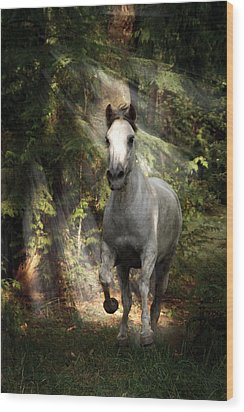 Breaking Dawn Gallop Wood Print by Wes and Dotty Weber