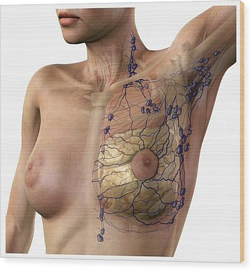 Breast Lymphatic System, Artwork Wood Print by D & L Graphics