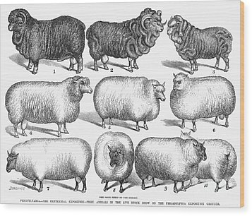 Breeds Of Sheep, 1876 Wood Print by Granger
