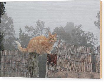Bridging Cat Wood Print by Ron McMath