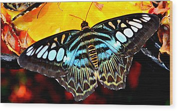 Wood Print featuring the photograph Bright And Blue by Rima Biswas