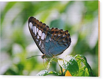 Wood Print featuring the photograph Bright Blue Butterfly by Peggy Franz