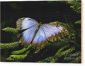 Bright Blue  Wood Print
