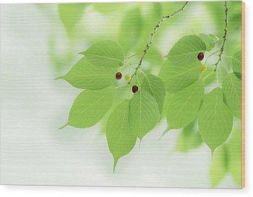 Bright Green Leaves Wood Print by Imagewerks