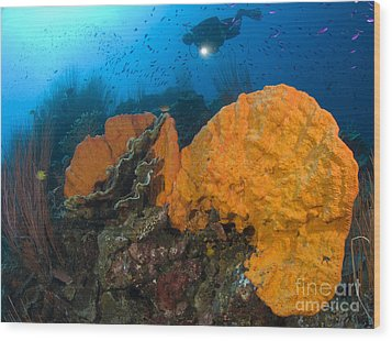 Bright Orange Sponge With Diver Wood Print by Steve Jones